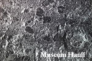 Museum Hauff in Holzmaden/Teck, Württemberg;