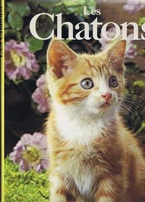 Les chatons: Angela Sayer