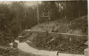 Malaisie, Albion mail car and Milnes-Daimler lorry on a typical section of the Pahang trunk road.