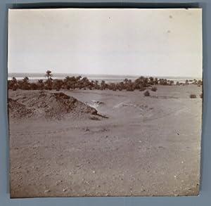 Algérie, Timimoun (???????), Oasis El Sebkha: Photographie originale /