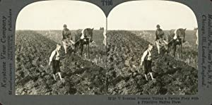 STEREO, Russie, Russian farmer tilling field with primitive native plow