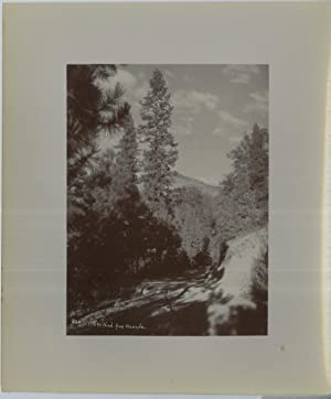 Amateur, Etats Unis, The road from Wawona