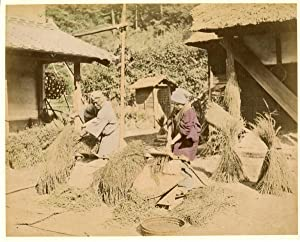 Japon, People threshing harvested rice