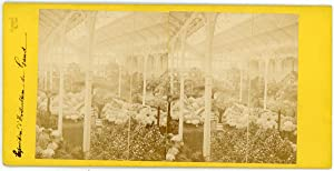 Stereo Belgique, Gand, Exposition d'horticulture, circa 1870