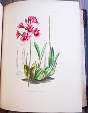 A Century of Orchidaceous Plants, Selected from Curtis's Botanical Magazine, Consisting of A ...