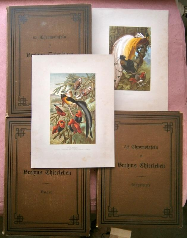 170 Chromotafeln aus Brehms Tierleben. Säugetiere (Band I-III; 52 Tafeln); Vögel (Band ...