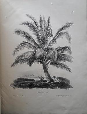 Etudes d'arbres asiatiques: MILBERT, Jacques-Gérard