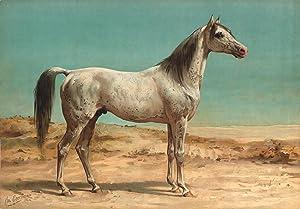 Paardenrassen: EERELMAN, Otto /