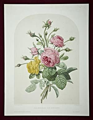 A HAND-COLORED LITHOGRAPH,
