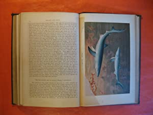 Royal Natural History Volume 5, Section 10: Fishes, Etc.: Lydekker, Richard (ed.)