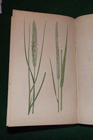 A NATURAL HISTORY OF BRITISH GRASSES: LOWE, E. J.