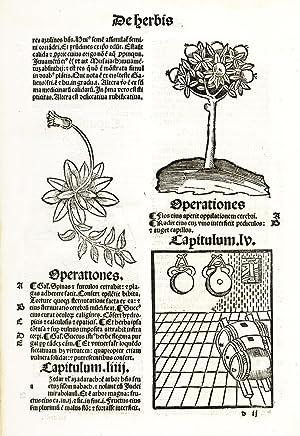 De Herbis et Plantis. De Animalibus e: HORTUS SANITATIS: