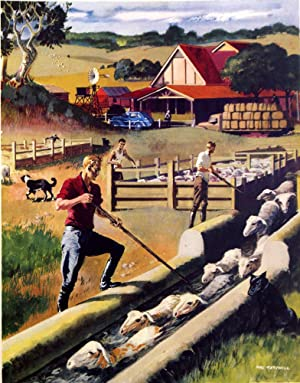 Dipping Sheep in Australia (Original Macmillan Poster) - Print: Mac Tatchell