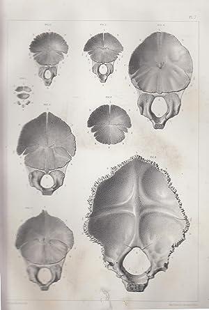 Origine et développement des os (atlas seul): RAMBAUD, A. &