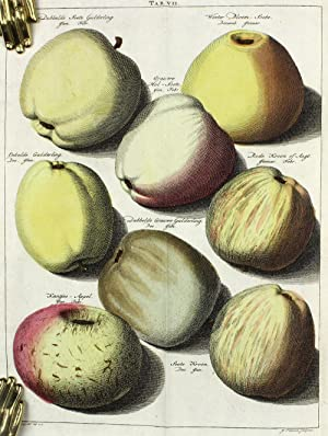Fructologie, ou Description des arbres fruitiers ainsi que des fruits que l'on plante et qu&#39...