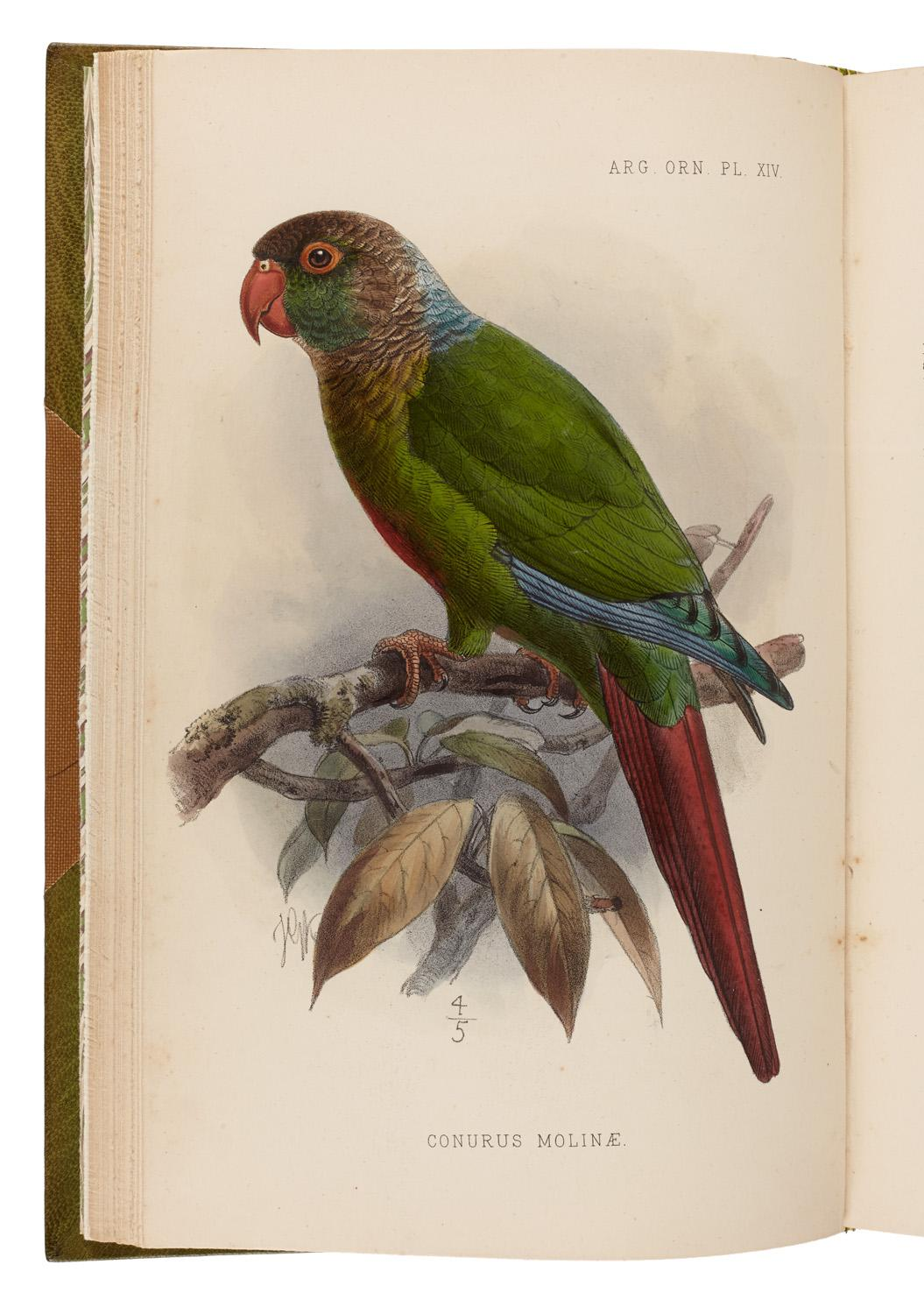 Argentine Ornithology. A descriptive catalogue of the birds of the Argentine Republic
