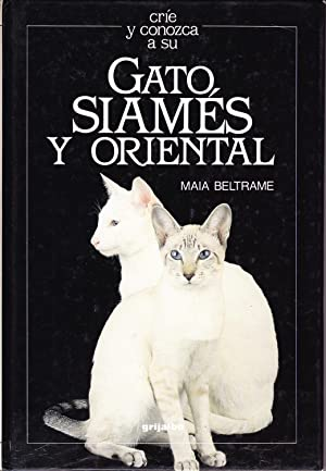 GATO SIAMES Y ORIENTAL: Maia Beltrame