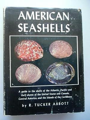 American Seashells 1954 Seemuscheln Muscheln