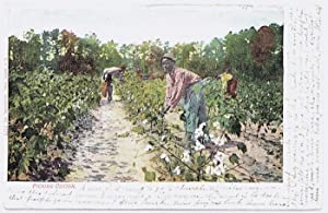 Vintage Postcard - 'Picking Cotton', early 20th C.