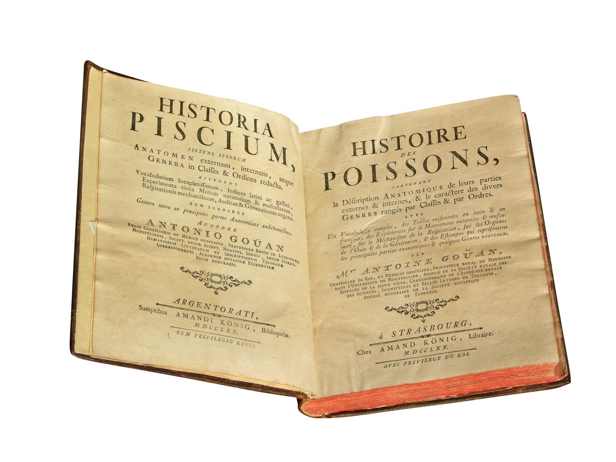 Lydon F Vintage Facsimile Poisson Imprimé~ Doré & Bronze Carp ~ A