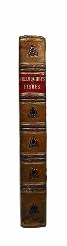 De Historia Piscium libri quatuor, jussu &: WILLUGHBY, Francis