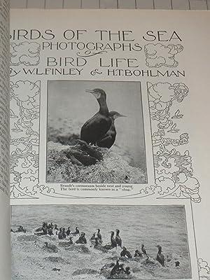 1906 The Outlook Magazine: The Panama Canal - A Buffalo Herd - Birds of the Sea Photographs - How ...