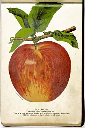 [NURSERY SPECIMEN BOOK FROM CHASE BROTHERS NURSERY IN ROCHESTER].: [Nursery Specimen Book]: [Fruit ...