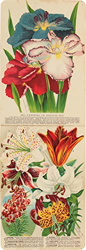 [SPECIMEN BOOK FOR THE ROCHESTER NURSERY CO., CONTAINING EIGHTY-TWO CHROMOLITHOGRAPHIC ILLUSTRATI...