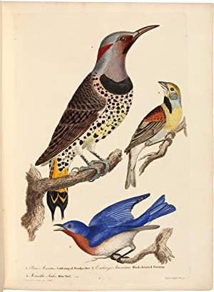 AMERICAN ORNITHOLOGY; OR THE NATURAL HISTORY OF THE BIRDS OF THE UNITED STATES. ILLUSTRATED WITH ...