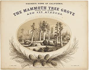 VISCHER'S VIEWS OF CALIFORNIA. THE MAMMOTH TREE GROVE, CALAVERAS COUNTY, CALIFORNIA. AND ITS AVENUES