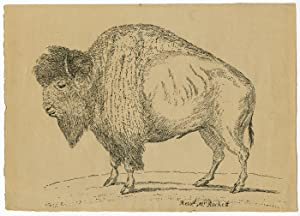 [EARLY PEN LITHOGRAPH OF AN AMERICAN BISON, DRAWN BY REVEREND THOMAS RACKETT IN THE EARLY 19th CE...