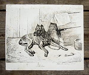 Kupferstich von Johann Adam Klein. Philax.: Hund, Dog, Jagdhund,