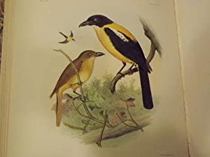 Exotic Ornithology…: Sclater, Philip Lutley;
