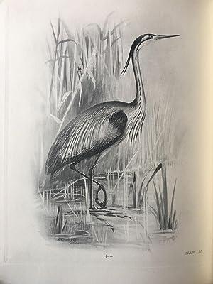The Birds of the British Isles: STONHAM, Charles