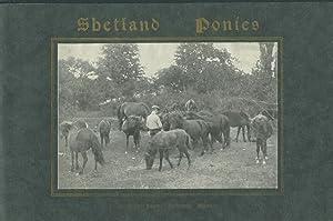Thoroughbred Shetland Ponies Adapted to Children: Shetland Farm, Bedford, MA