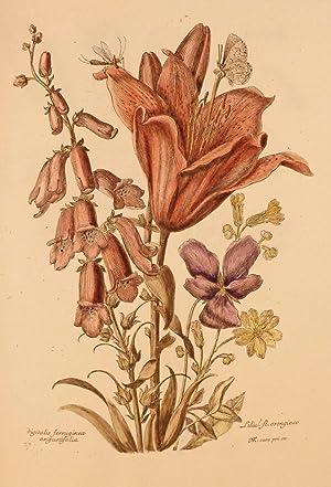 Variae ac Multiformes Florum Species; Designees et Gravees d'apres le naturel par Nicholas ...