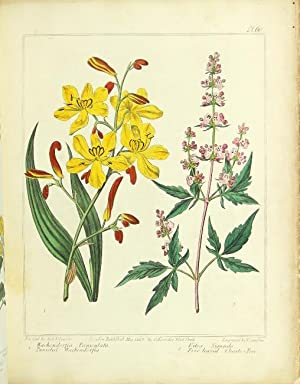 The new flora Britannica, illustrated with one hundred thirty-three plates, engraved by Sansom, ...