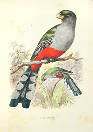 The birds of Haiti and San Domingo.: Cory, Charles B.