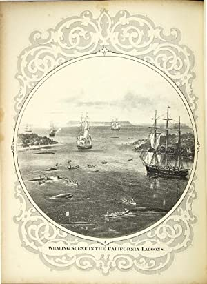 The marine mammals of the north-western coast of North America, described and illustrated: together...