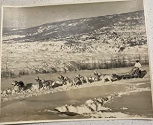 (PHOTOGRAPH) MALAMUTE TEAM WITH DOG SLED