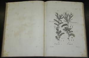 Historia Salicvm [Salicum]. Iconibus illvstrata. Fascicvlvs Primvs: Hoffmann, Georg Franz: