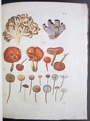 Miscellanea Austriaca ad botanicam, chemiam, et historiam naturalem spectantia, cum figuris partim ...
