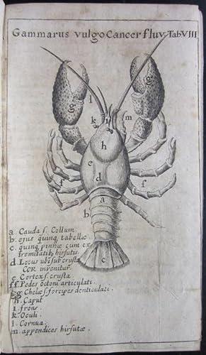 Gammarologia sive Gammarorum vulgo cancrorum consideratio physico - philologico - historico - ...