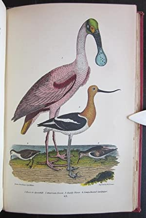 American Ornithology; or, The Natural History of the Birds of the United States (Complete Set of 3 ...