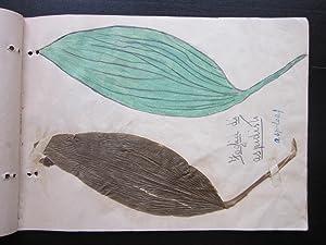 Botanical Scrapbook: Leaf Specimens and Drawings: manuscript]