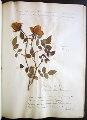 Manuscript Herbarium, with Specimens: manuscript herbarium]; Chilton, Fanny Evelyn