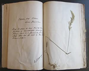A Collection of Grasses, With description of their Agricultural Value: Cochrane, W. J.