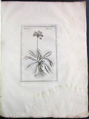 Phytobasanos -- Piscium Aliquot Plantarum Novarum Historia [in Greek]: COLONNA, Fabio (1567-1650?)