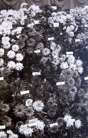 Societe Nationale d'Horticulture de France, Exposition Generale: horticulture]; Robert, C. (...