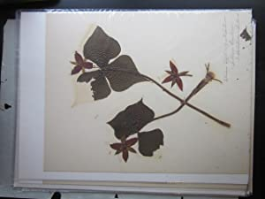 Collection of 15 Botanical Specimens: [botanical specimens]; Gordon, Nettie E.